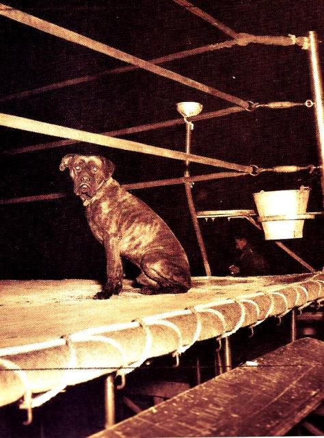 perro1950